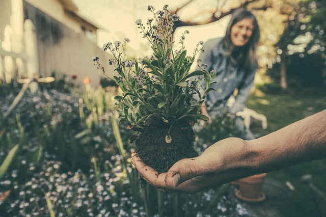 5 Ways to Come up with a Medicinal Herb Garden Plan gardening-exercise