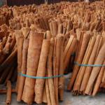 cassia-plant-bark