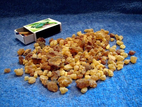 KNOW: Boswellia papyrifera (African Frankincense)