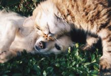 7 Ways To Keep Your Pet Engaged